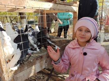 Клуб выходного дня. Выставка декоративных птиц и животных.
