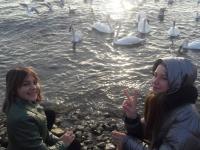 Экскурсия «В гости к белым лебедям»